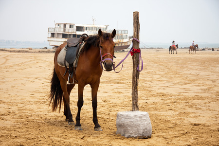 scenic spots: Horse on a scenic spots of golden sand beach