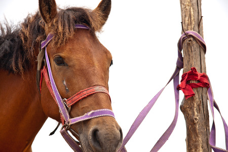 scenic spots: Close up to a horse at the scenic spots of golden sand beach Stock Photo