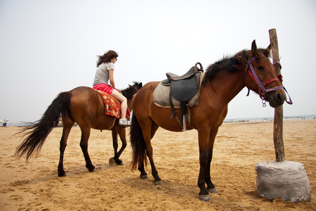 scenic spots: Close up to a horse on the scenic spots of golden sand beach