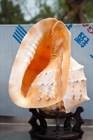 shell fish: Close up of shell fish Stock Photo