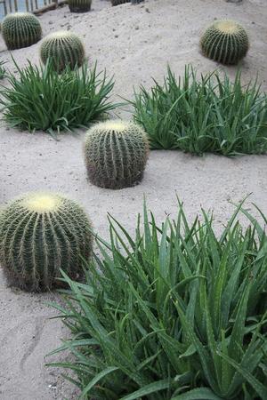 increase fruit: Cactus ground