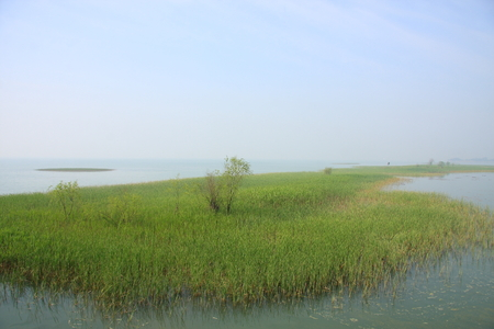 during the day: Lakeside view during day time with aquatic grass on lake