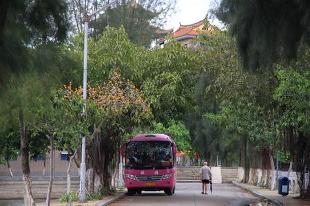 bus station: Green bus station, summer.