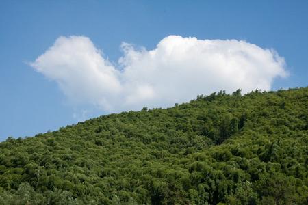 nature scenery: Nature scenery  Stock Photo