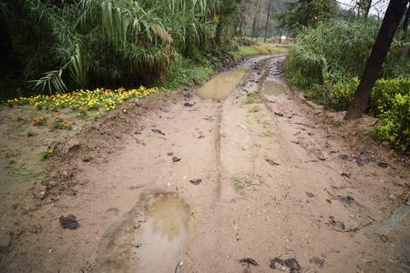 muddy: Muddy trails