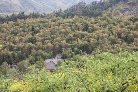 arboleda: bosque de bamb�  Foto de archivo