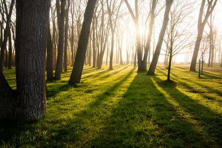 Morning sun light rays coming thru springtime trees Stock Photo