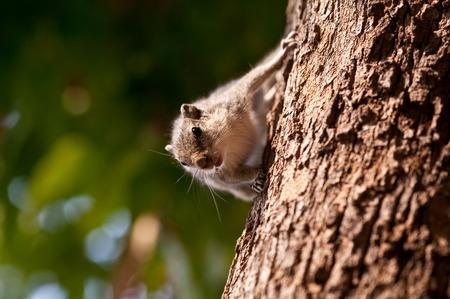droll: Chipmunk on the tree Stock Photo