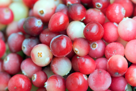 bacca: Red Fresh Cranberry closeup background Stock Photo