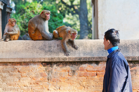 banter: Young Nepalese man teasing monkeys on January 09, 2010 in Kathmandu, Nepal