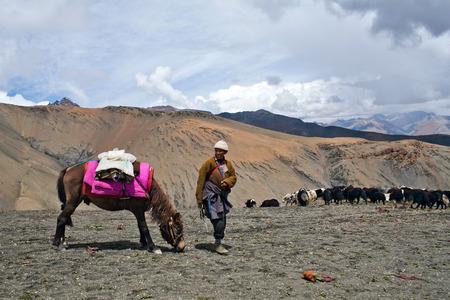 herdsman: SHEY LA, NEPAL - SEPTEMBER 5: Tibetan nomad with yaks walking across Shey La pass on September 5, 2011 in the Nepal Himalaya