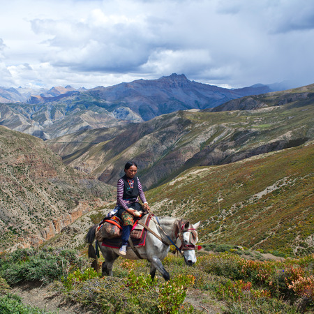 drover: SHEY LA, NEPAL - SEPTEMBER 5: Tibetan girl riding across Shey La pass on September 5, 2011 in Shey village, Nepal Editorial
