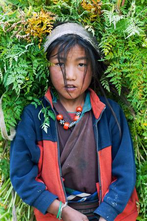 DHO TARAP, NEPAL - SEPTEMBER 10: Tibetan girl working in the fields on September 10, 2011 in Dho Tarap village, Dolpo, Nepal Editorial