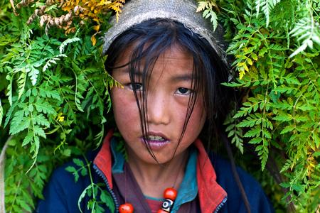 DHO TARAP, NEPAL - SEPTEMBER 10: Tibetan girl working in the fields on September 10, 2011 in Dho Tarap, Upper Dolpo, Nepal Editorial