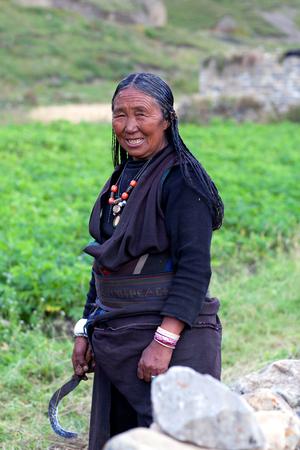 DHO TARAP, NEPAL - SEPTEMBER 10: Tibetan woman working in the fields on September 10, 2011 in Dho Tarap, Upper Dolpo, Nepal Editorial