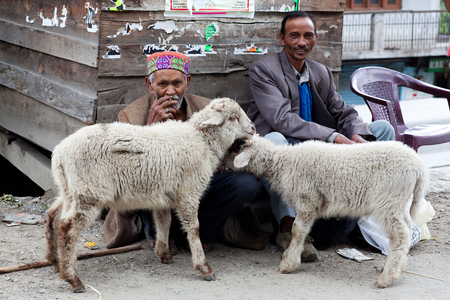 milker: Men with two sheep poses for a photo on the road to Leh on June 08, 2012 in Manali, India
