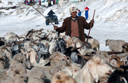 drover: ROHTANG LA, INDIA - JUNE 9, 2012: Indian man with goats walking across Rohtang La Pass in the Indian Himalayas, Jammu and Kashmir, India