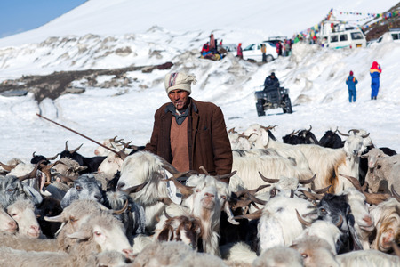 ROHTANG LA, INDIA - JUNE 9, 2012: Drower with goats walking across Rohtang La Pass in the Indian Himalayas, Jammu and Kashmir, India Editorial