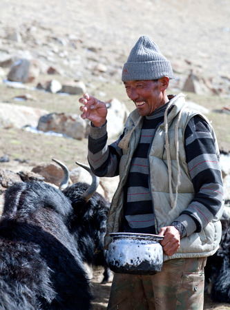 milker: LADAKH, INDIA - JUNE 15, 2012: Tibetan nomad milking yak cow by hands in Ladakh, Jammu and Kashmir, North India