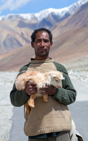 drover: LADAKH, INDIA - JUNE 15: Changpa nomad with angora goat walking on the road to Spangmik village on June 15, 2012 in Ladakh, Jammu and Kashmir State, North India