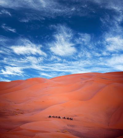 chebbi: Camel trekking in Erg Chebbi, Western Sahara, Morocco