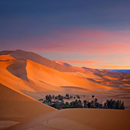 Oasis over Sand dunes in Erg Chebbi of Sahara desert in Morocco, Africa Stock Photo