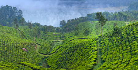 Panorama of tea plantations in Munnar, Kerala, South India. Munnar is situated at around 1,600 metres above sea level in the Western Ghats range of mountains. Stock Photo