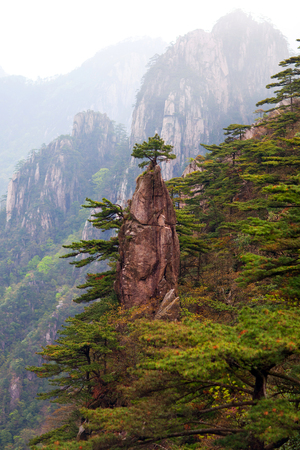 Pine tree on the top of the paint brush view point in Huangshan mountain, China. Of all the notable mountains in China, it is probably the most famous to be found in the south of Anhui province.