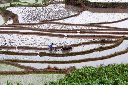 yuan yang: Terraced rice fields in Yuan Yang County, China. Here farmers still practice old farming methods.