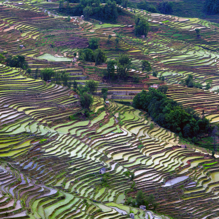 Terraced rice fields in Yuanyang county, Yunnan, China. Yuanyang county lies at an altitude ranging from 140 along the Red River up to nearly 3000 metres above sea level in the Ailao mountains. Stock Photo