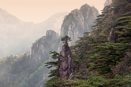 Pine tree on the top of the paint brush view point in Huangshan mountain, Anhui Province of China