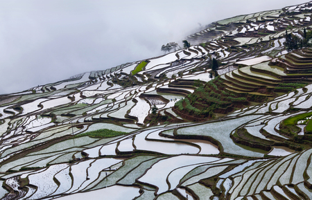 terracing: Panorama of terraced rice fields in Yuanyang county, Yunnan, China