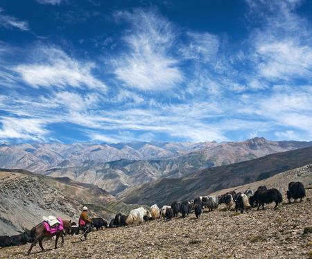 馬とキャラバンの正体不明のチベット遊牧民ヤク上部ドルポ、ラダック Phoksundo 国立公園、ネパール、ヒマラヤのラダックでのトレッキング ラ峠交