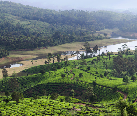 Panorama of tea plantation in Kerala, South India Stock Photo