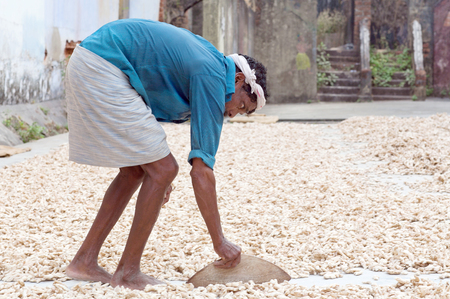 FORT COCHIN, INDIA - JANUARY 22, 2016: Ginger worker laying out ginger into piles at old ginger factory in Fort Cochin, Kerala