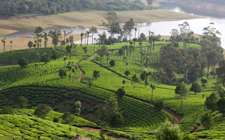 Panorama of tea plantations in Western Ghats range of mountains, Kerala, South India. Stock Photo
