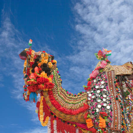 Decorated Dromedary Camel on Bikaner Camel festival in Rajasthan, India