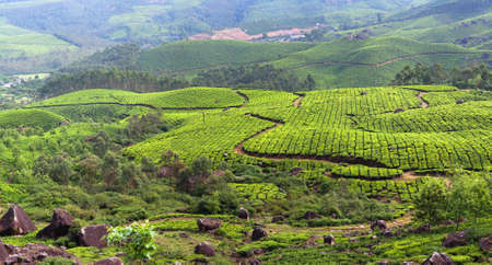 Panoramic view of tea plantations in Munnar, Western Ghats range of mountains, Kerala state, South India.