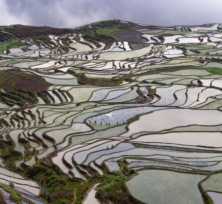 Terraced rice fields in Yuanyang county, Yunnan, China. Yuanyang county lies at an altitude ranging from 140 along the Red River up to nearly 3000 metres above sea level in the Ailao mountains. Zdjęcie Seryjne