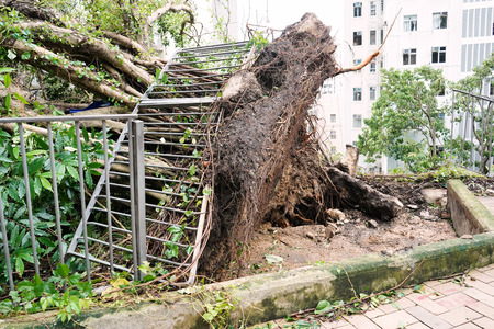 Mass displacement of tree after typhoon
