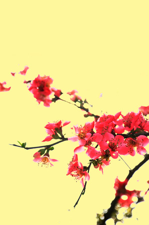 thriving: close up of Begonia