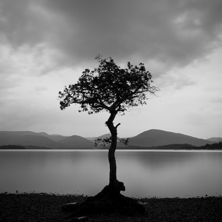 Silhuette of tree standing at the beach of a lake