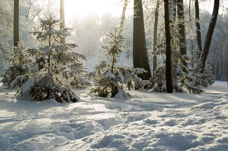 rime frost: Trees mantled with rime frost and bushes in the morning Stock Photo