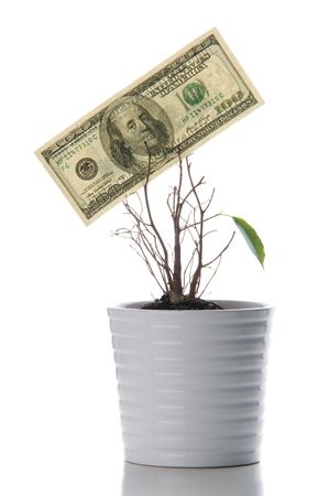Origin of a new life. A lonely green leaf and hundred dollars isolated on white Stock Photo