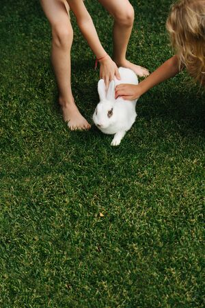 Children petting a white furry bunny rabbit on a green lawn. Girls storoking sowt furr of an animal. High angle. Work space. Stock fotó