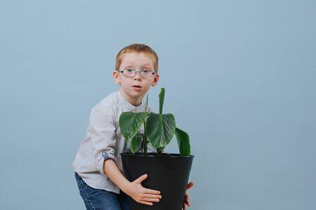 Petit garçon au gingembre dans des verres soulevant une grande plante en pot sur fond bleu. Il s'accroupit un peu, l'attrapant à deux mains pour le déplacer. Demi-longueur.