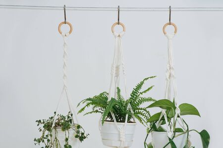 Three potted plans handing on a macrame pot holders in front of a while wall in a bright room. Close up.