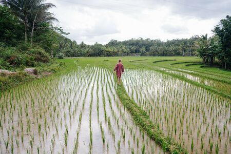 Little caucasian child walks up the path through beautiful rice fields overflowed by water, brown from the soil. They are extended all the way up to the forrest near horison.