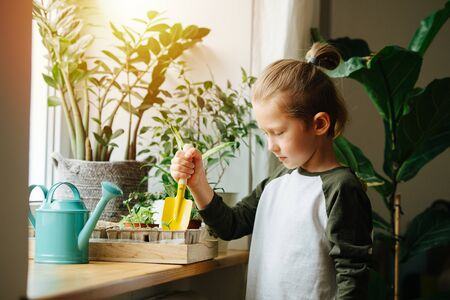 Curious little boy sticking a small gardening shovel in cardboard seedling pot on a sill. Looking down at it. Reklamní fotografie