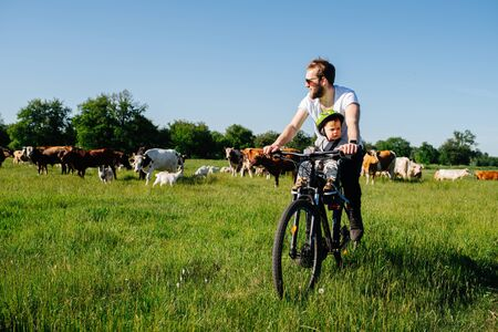 Father and his baby riding past field with cows. Bike tour in countryside on a beautiful summer day.